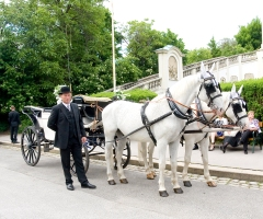 Fiaker carriage tours in Vienna